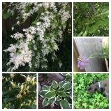 Happy #garden